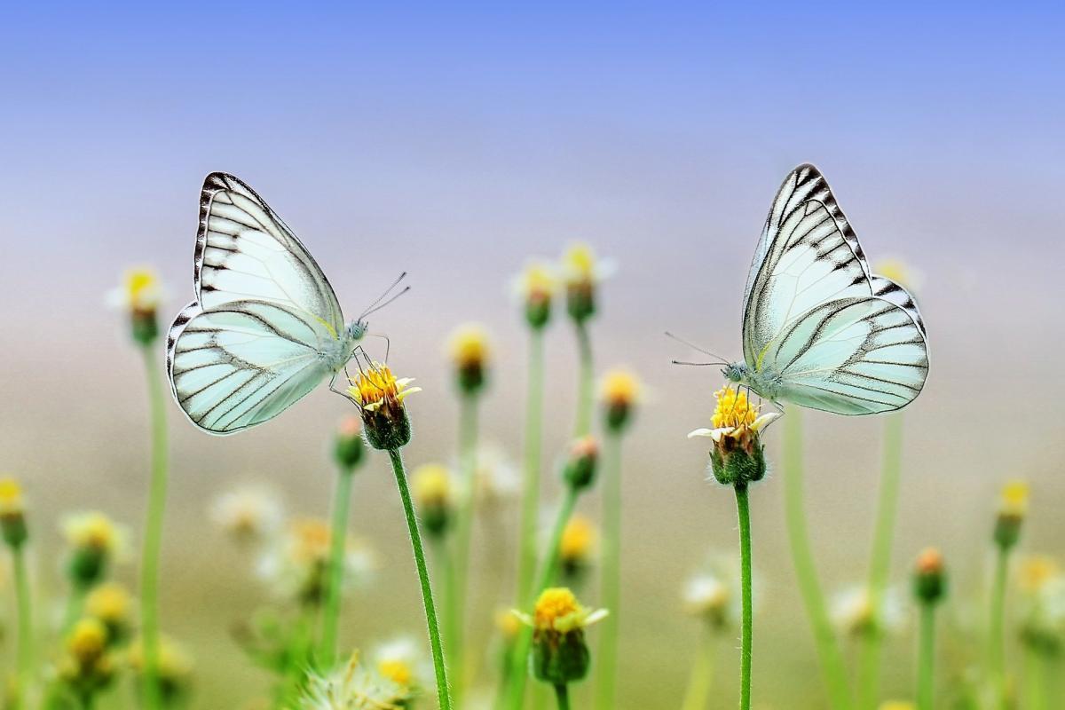Butterfly 1127666 1920