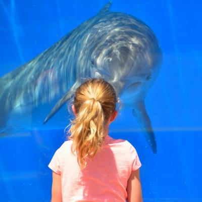 Dolphin 1548448 1920