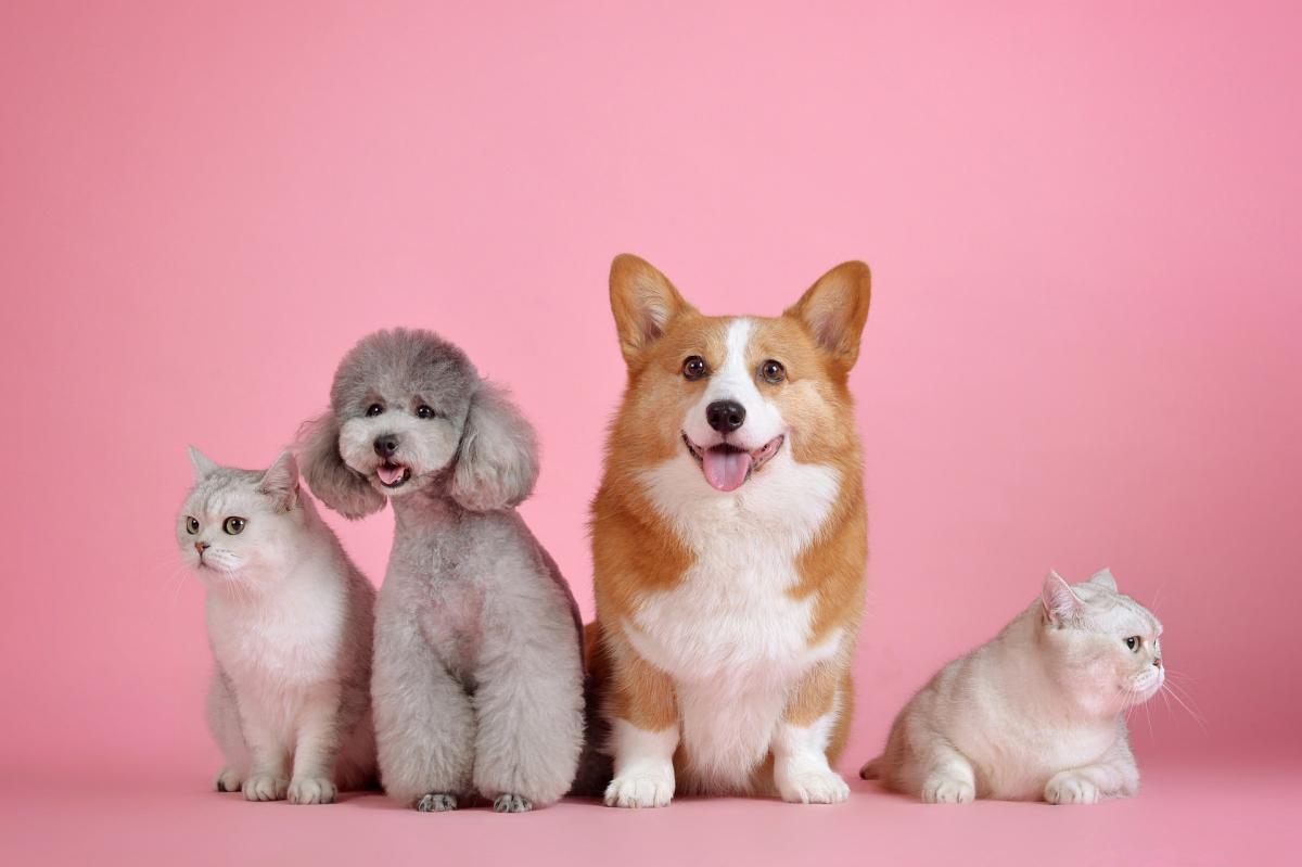 Pets 3715733 1920