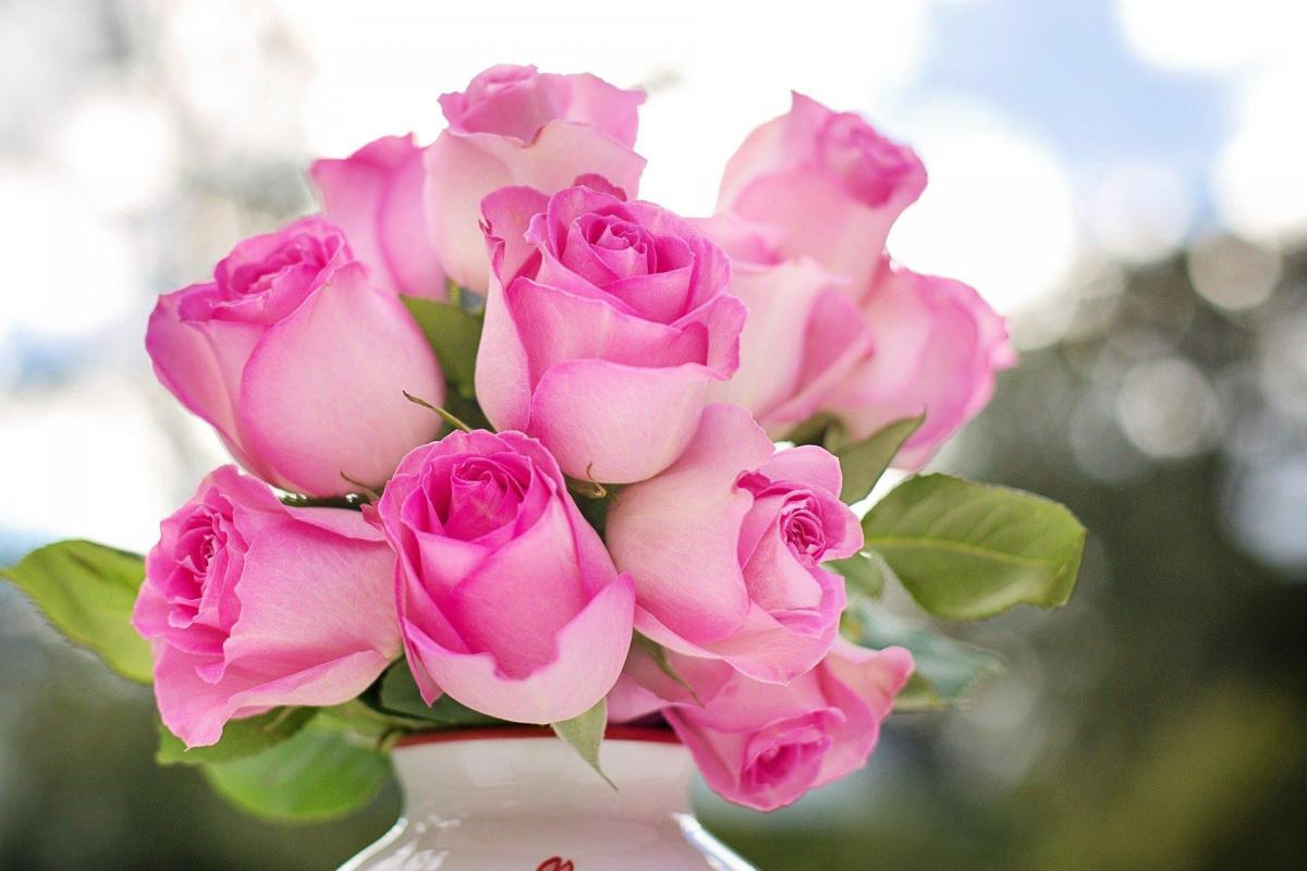 Pink roses 2191636 1920