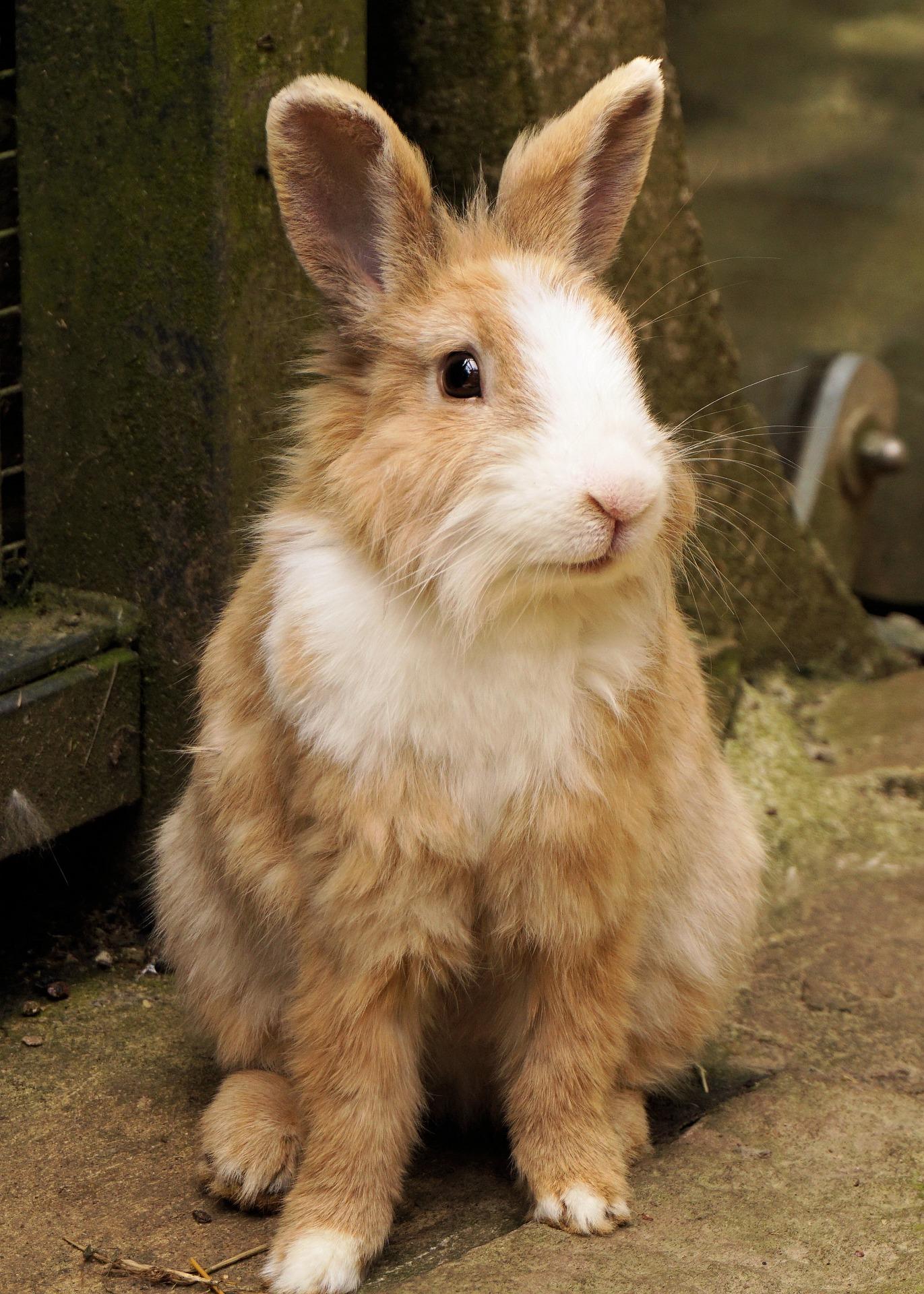 Rabbit 1440432 1920
